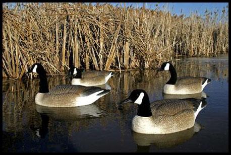Prairiewind Decoys Bigfoot Floating Canada Goose Decoys