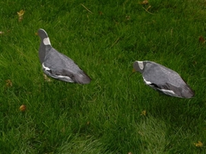 Picture of Pigeon Decoys by Sillosocks Decoys
