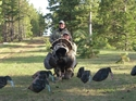 Picture of SS1463 Turkey Decoys  - 3 hens, 1 Jake