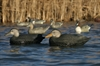 Picture of Over-Sized Black Duck Decoys (AV73015) By Greenhead Gear GHG Avery Outdoors