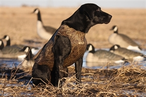 Picture of Standard Dog Parkas by Avery Sporting Dog - Avery Outdoors