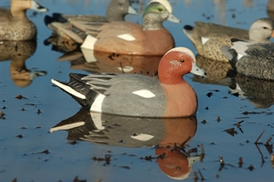 Picture of **SALE** Lifesize Eurasian Wigeons (AV73044) by Greenhead Gear GHG Avery Outdoors