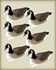 Picture of Standard Size Honker Floater 6 pack (FA474161) by Final Approach Decoys