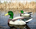 Picture of Flocked Head Mallard Floater