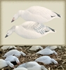 Picture of **SALE** SNOW GOOSE FEEDER SHELL Decoys 12 PACK (FA474194) by Final Approach Decoys