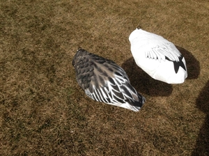Picture of **SALE** OVERSIZE Headless Windsock SNOW or Blue Goose Decoys  by Sillosocks Decoys