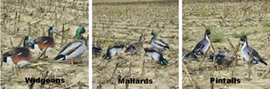 Picture of Western Duck Silhouettes 1 dz. by Big Al's Decoys