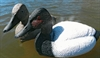 Picture of SUPER MAGNUM Swivel Canvasback Duck Decoys 6pk (CB11SM) by G&H Decoys