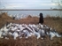 Picture of **SPRING SALE**  Blue Upright Floating Goose Decoys (DAK12140) 6 pack by Dakota Decoys