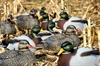 Picture of ***FREE SHIPPING***MALLARD UPRIGHT SHELL DECOYS 12 Pk  (FA474235) by Final Approach Decoys