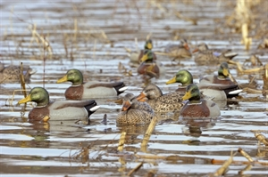 Picture of MALLARD SPECIAL BUY 4 Pack - FLOATING DUCK DECOYS  (FA475005P) by Final Approach