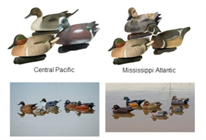 Picture of Central Pacific Flyway Combo 6 packs by Final Approach