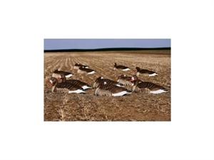 Picture of FFD Elite L/S Specklebelly Goose Shells Harvester 12 Pack (AV72058)