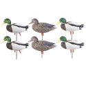 Picture of AV72226 Pro-Grade Full Body January Mallard Active 6 pk