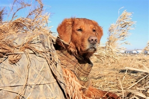 Picture of Tuff Dog Parkas 2XL/KW1 (AV03049)  by Avery Outdoors Greenhead Gear GHG