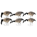 Picture of FFD Honkers - Feeder 6pk w/bag