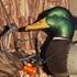 Picture of Braided Decoy Cord 100', 200', or 500' Camo  by Avery Outdoors Greenhead Gear GHG