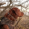 Picture of Cut to Fit Collars by Avery Outdoors Greenhead Gear GHG