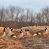 Picture of **FREE SHIPPING** Tim Newbold FFD Lesser Canada Goose Decoys - Active 6pk w/bag AV72305 by Greenhead Gear GHG Avery Outdoors