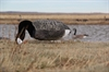 Picture of Sillosock Canada Feeder Goose Decoys (SS1081) by Sillosock Decoys