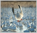 Picture for category **SNOW GOOSE SALE**