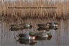 Picture of Top Flight Green Wing Teal Duck Decoys 6pk by Avian X Decoys