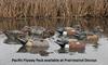 Picture of **SALE** Top Flight Pacific Flyway Pack Duck Decoys 6pk (Z8093) by Avian X Decoys Zink Calls