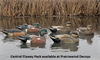 Picture of Top Flight Central Flyway Pack Duck Decoys 6pk (Z8092) by Avian X Decoys Zink Calls