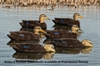 Picture of Top Flight Flocked Black Duck Decoys 6pk  by Avian X Decoys
