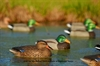 "Picture of **FREE SHIPPING** ""Hot Buy"" Mallard Duck Decoys (Original) (AV70003) by Greenhead Gear GHG Avery Outdoors"