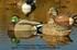Picture of Pro-Grade Mallard Sleeper Duck Decoys (2 pack) (AV71004) by Greenhead Gear GHG Avery Outdoors