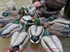 Picture of ***FREE SHIPPING*** Pro-Grade Wigeon Duck Decoys by Greenhead Gear GHG Avery Outdoors