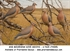 Picture of **FREE SHIPPING** Mourning Dove Decoys 6pk by Greenhead Gear GHG Avery Outdoors