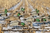 Picture of **FREE SHIPPING** OVER-SIZE Mallard Shell Duck Decoys (Harvester 1 dz  by Greenhead Gear GHG Avery Outdoors