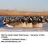 Picture of **FREE SHIPPING** Pro-Grade Honker Canada Shell Decoys Harv. 12pk (AV72064) by Greenhead Gear GHG Avery Outdoors