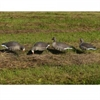 Picture of *FREE SHIPPING* Pro-Grade Specklebelly Goose Shell Decoys Harvester 12pk by Greenhead Gear GHG