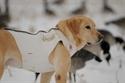 Picture of AV00985 Standard Dog Parka - White -  Medium