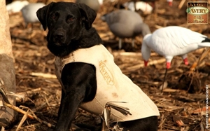 Picture of WHITE Standard Dog Parkas by Avery Outdoors Greenhead Gear GHG