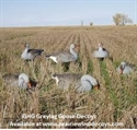 Picture of Pro Grade Greylag Goose Shells 1dz