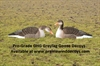 Picture of **SALE** Pro-Grade Greylag Goose Shells 1 dz. (AV72401) by Greenhead Gear GHG Avery Outdoors