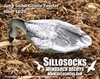 Picture of **SALE** Juvy Snow Goose Decoys by Sillosock Decoys