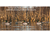 Picture of **FREE SHIPPING** FULLY Flocked Mallard Floater Duck Decoys 6pk (DAK17100) by Dakota Decoys
