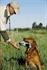 Picture of Duck Dog Basics III  DVD - Advanced Handling by  Avery Outdoors Greenhead Gear  GHG