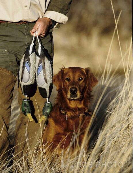 Prairiewind Decoys Duck Dog Basics Dvd Combo Pack By