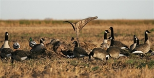 Picture of Canada Goose Power Flag - Blades Camo backed (AV71538) by Avery Outdoors Greenhead GHG
