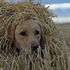 Picture of **SALE** Ground Force Dog Blind Ghillie Cover by Avery Outdoors Greenhead Gear GHG