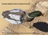 Picture of **SALE** FlockSox Mallard Duck  Decoys -  (SS1074FS) by Sillosock Decoys