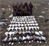 Picture of **FREE SHIPPING*** Econo Snow Goose Silhouette Decoys by Real Geese Decoys