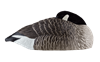 Picture of **FREE SHIPPING** AXF Flocked Canada Sleeper Shell Decoys by Avian X Decoys