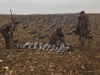 Picture of *SALE* Sandhill Crane Decoys by Sillosock Decoys